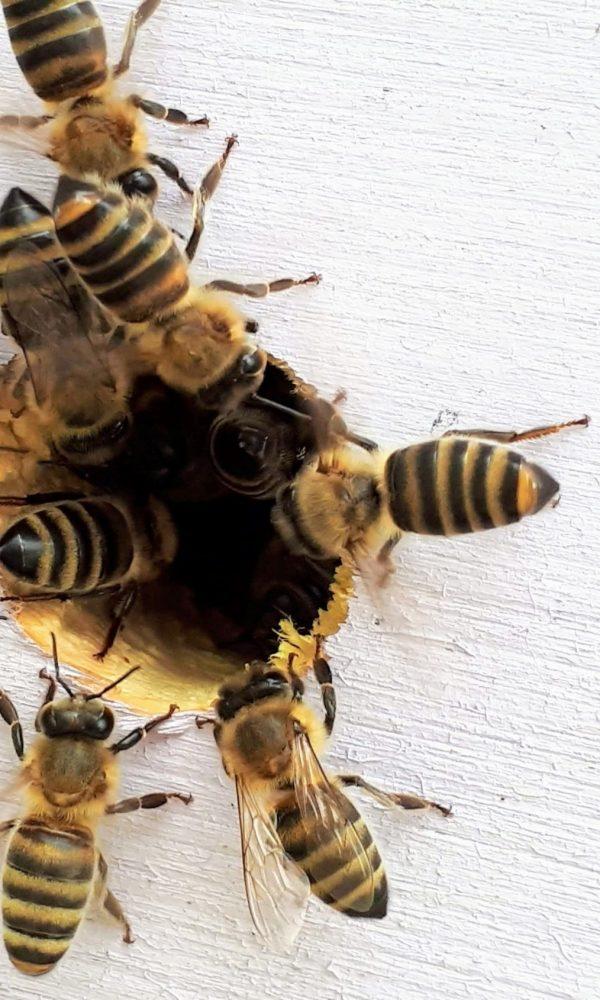 Busy Bees boba-jaglicic-EmwhXkCiMiA-unsplash